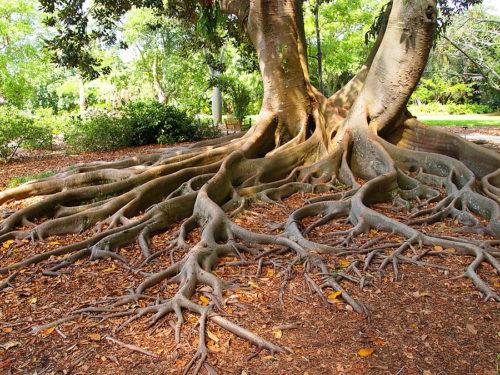 Разветленные корни